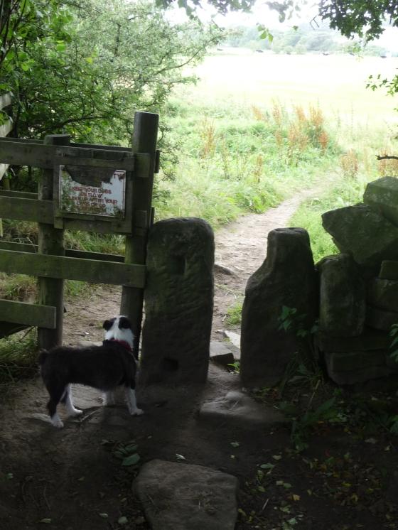 august sough park walk narrow 098